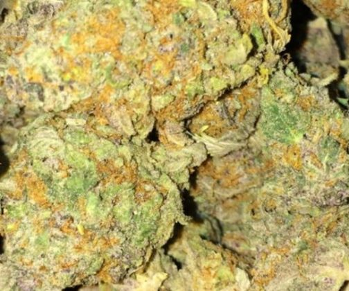 Platinum Girl Scout Cookies Strain